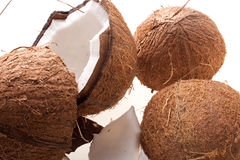 Coconut Royalty Free Stock Photography