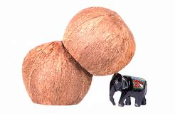 Coconut. A small elephant desperately supporting a falling coconut stock photo
