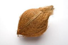 Coconut. On a plain studio background Stock Photo