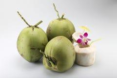 Coconut Stock Image