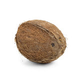Coconut. Whole coconut isolated on white Stock Images