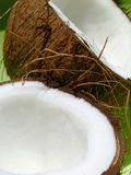 Coconut. Close-up of an opened coconut fruit over a green background Stock Image
