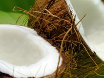 Coconut. Close-up of an opened coconut fruit over a green background Royalty Free Stock Photography