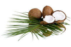 Coconut. Still-life of  coconut with  olive-branch on white background, isolated Stock Images