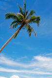 Coconut. Tree and the blue sky Stock Images