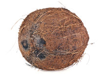Coconut. A coconut on white background Royalty Free Stock Photography