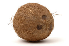 Coconut. Whole coconut on a white background Stock Images