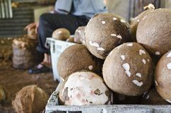 Coconut. No shell is in the basket Stock Photography