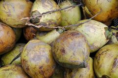 Coconut. Some green coconut in the market Royalty Free Stock Photos