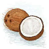 Coconut. Closeup illustration of a half and whole coconut Stock Photo