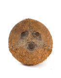 Coconut. Still ife image of a coconut Royalty Free Stock Photos