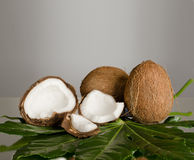 Coconut. Still-life of  coconut with  olive-branch on grey background Royalty Free Stock Images