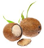 Coconut. Royalty Free Stock Photography