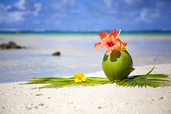 Coconut. At the beach of Mauritius Stock Images