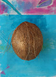 Coconut. Whole coconut photographed on a painted tropical blue background Royalty Free Stock Photography