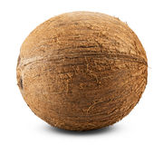 Free Coconut Stock Photography - 46152062