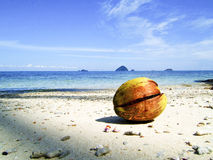 Coconut. Lonely coconut on the cariebbean beach Stock Photography