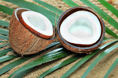 Coconut. On the brach with leaf Royalty Free Stock Image