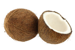 Coconut Stock Image