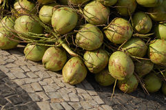 Coconut. A lot of coconut stock images