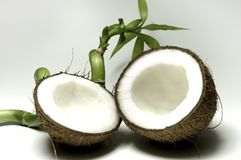 Coconut 9 stock images