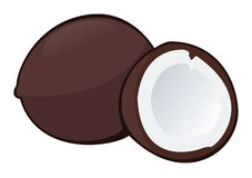 Coconut. Illustration of a coconut on white background - Isolated object Royalty Free Stock Images