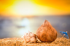 Coconut against sea at the sand beach Royalty Free Stock Images