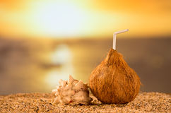 Coconut against sea at the sand beach Royalty Free Stock Photo