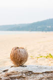 Coconut on the Andaman beach with Sunset Royalty Free Stock Image