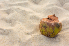 Coconut on the Andaman beach with Sunset Royalty Free Stock Images