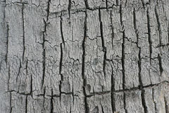 Coconut Bark Pattern. South of Thailand Royalty Free Stock Images