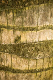 Coconut Bark Texture. Closeup of coconut tree trunk bark texture Royalty Free Stock Images