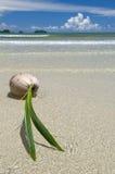 Coconut on a beach Stock Photography