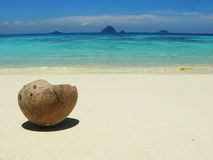 Coconut on the beach. Coconut on the tropical island Stock Images