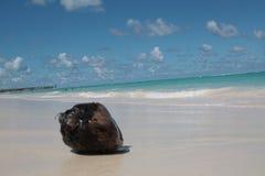Coconut on the beach. Coconut lying on the sand on the beach under the blue sky Stock Photo