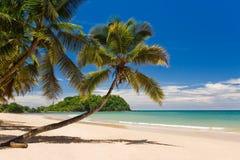 Coconut on the beach Stock Photos