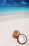 Coconut on the beach Royalty Free Stock Photography