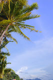 Coconut on the beach. Coconut and blue sky on the beach Royalty Free Stock Photography