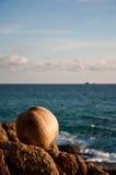 Coconut @ the beach. Tropicana coconut at the beach stock photos