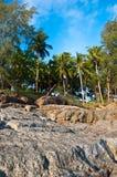 Coconut @ the beach. Tropicana coconut at the beach royalty free stock photo