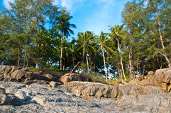 Coconut @ the beach. Tropicana coconut at the beach stock photography
