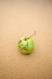 Coconut on beach Stock Photos