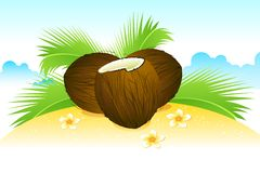 Coconut on Beach Stock Photography