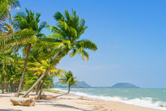 Coconut  beach. Royalty Free Stock Image