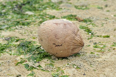 Coconut At The Beach Royalty Free Stock Photo