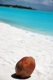 Coconut Beach. Coconut on white maldivian beach Stock Image