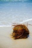 Coconut on the beach. Hairy husky coconut on a beach in Trinidad Royalty Free Stock Photos