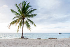 Coconut and beach Royalty Free Stock Photography