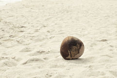Coconut on the beach. A coconut washed ashore on a tropical beach Stock Photo