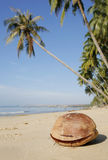 Coconut on Beach Royalty Free Stock Images